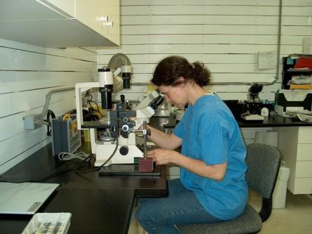 trans bio transfert d 39 embryons transfert d 39 embryons quins dr suzanne laurence. Black Bedroom Furniture Sets. Home Design Ideas